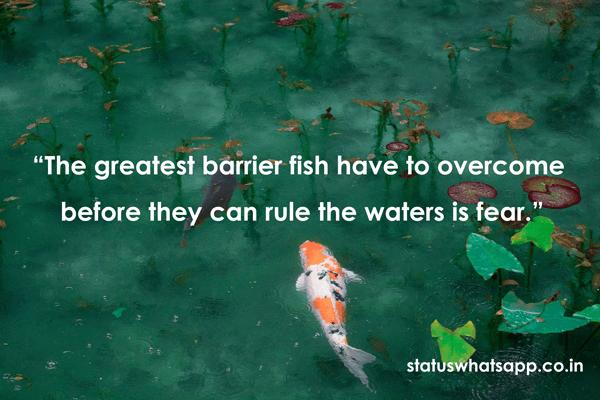 fish-quotes